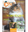 Matou Chat n°020
