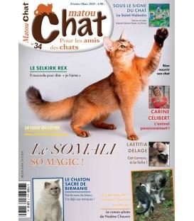 Matou Chat n°034